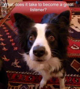 Dog focused on getting a treat to illustrate active listening skills exercises article